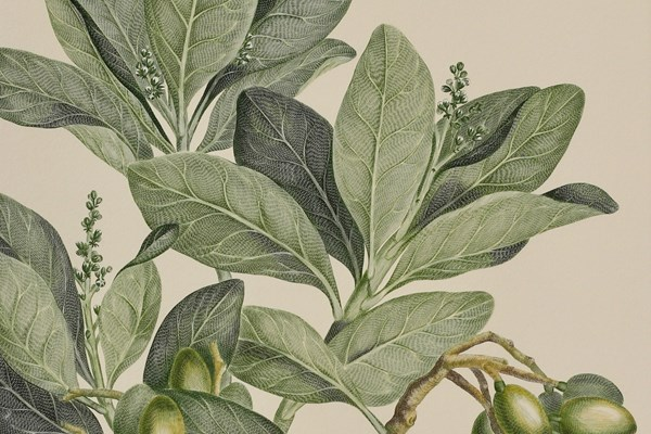 The Re-Discovery of Sir Joseph Banks' Florilegium